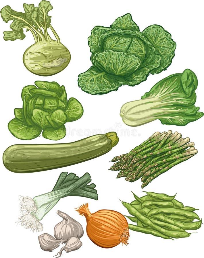 Vegetables III vector illustration
