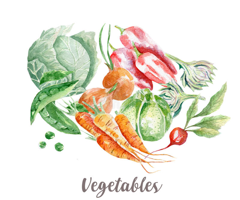 Vegetables illustration. Hand drawn watercolor on white background. royalty free illustration
