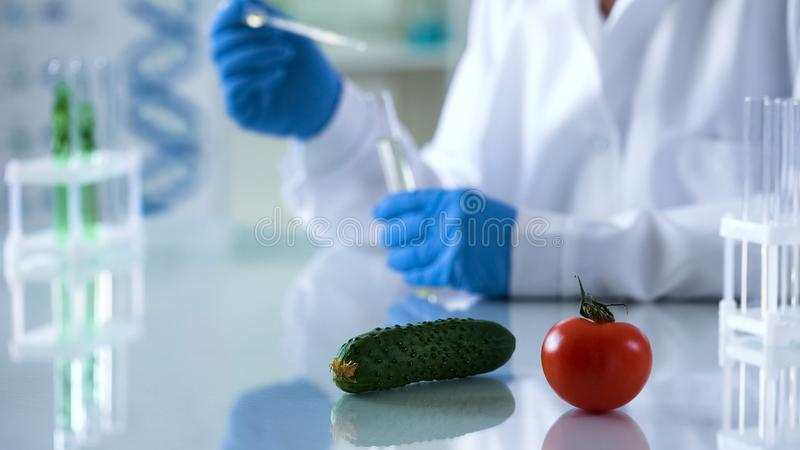 Vegetables lying on laboratory table genetically modified food studies, breeding stock photos