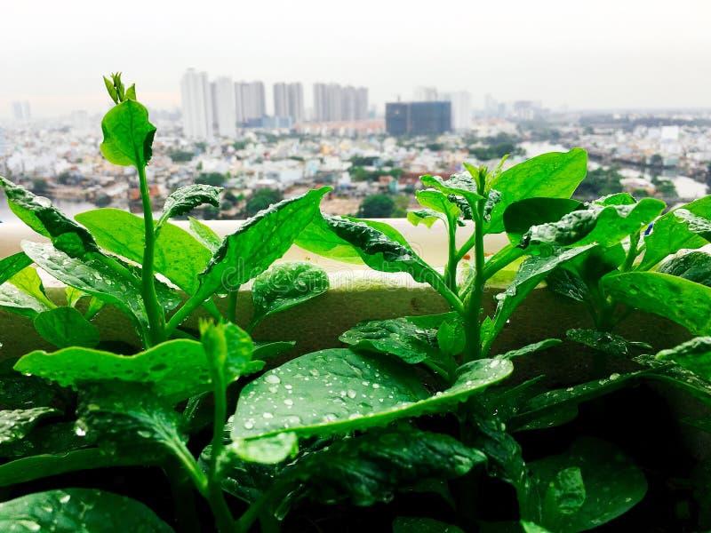 Vegetables mini garden farm on rooftop in urban city.  stock photo