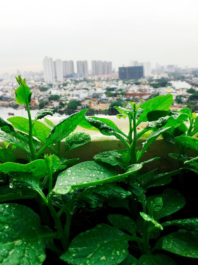 Vegetables mini garden farm on rooftop in urban city.  royalty free stock image