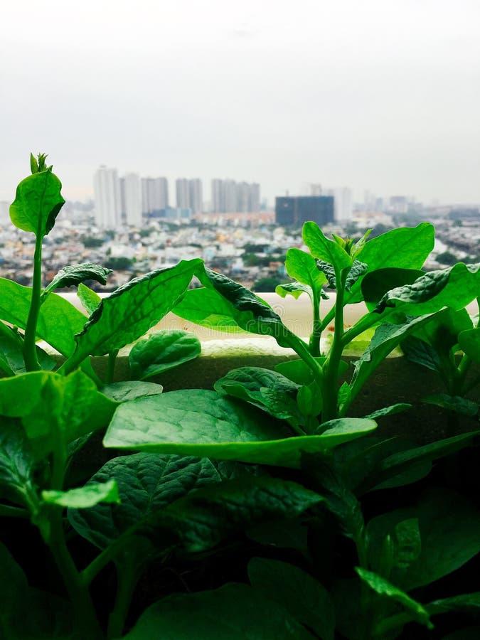 Vegetables mini garden farm on rooftop in urban city.  stock photos