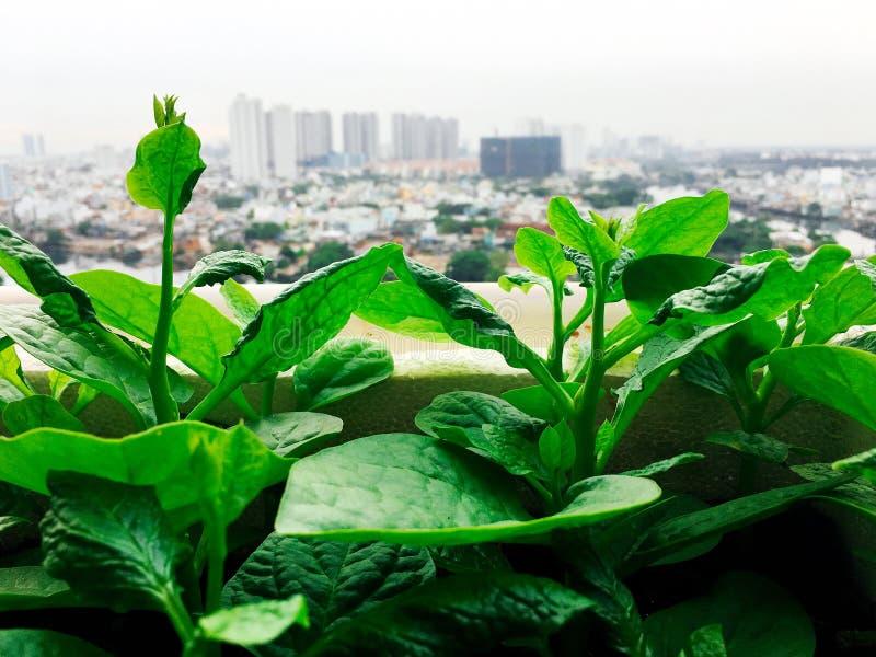 Vegetables mini garden farm on rooftop in urban city.  royalty free stock photos