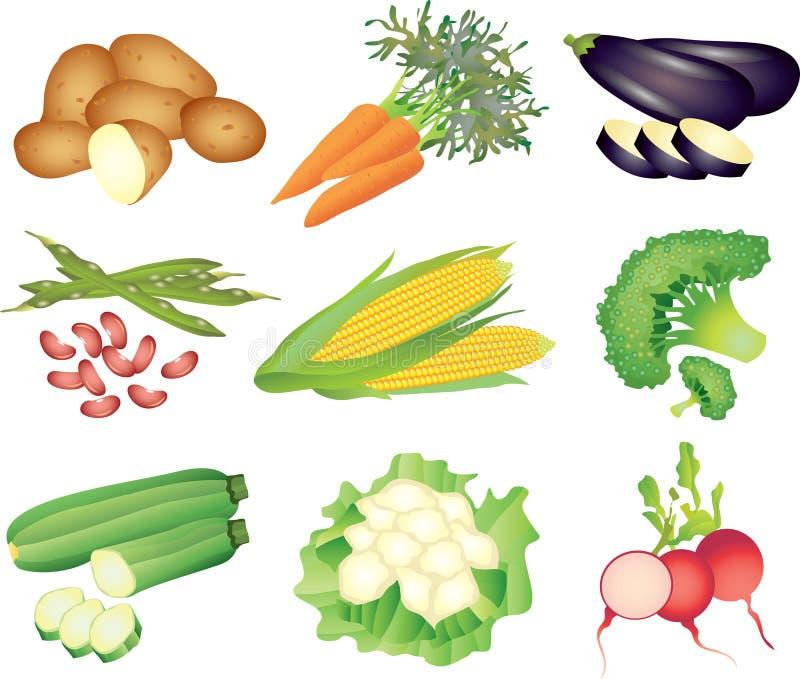 Vegetables photo-realistic set vector illustration