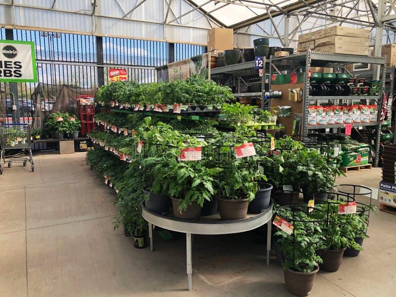 Lowes garden plants