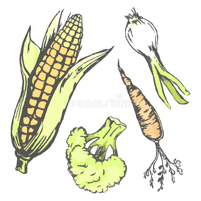 Vegetables at Random in Graphic Design Collection. Vector closeup set of plants harvest corn cob, broccoli cabbage, orange carrot, green onion royalty free illustration