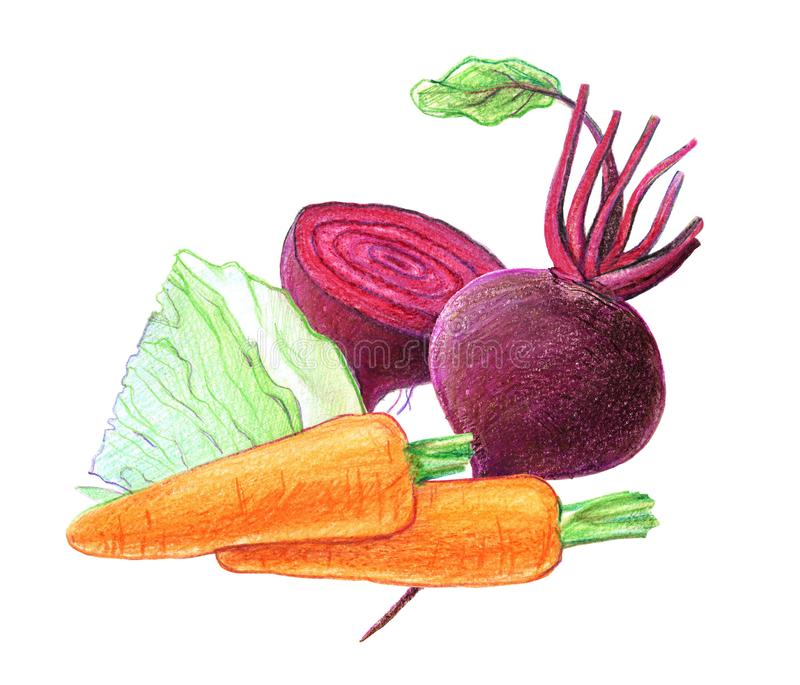 Vegetables and root vegetables. Beets, cabbage, carrots. Whole and in a cut. Graphic drawing with colored pencils. Isolated on royalty free illustration