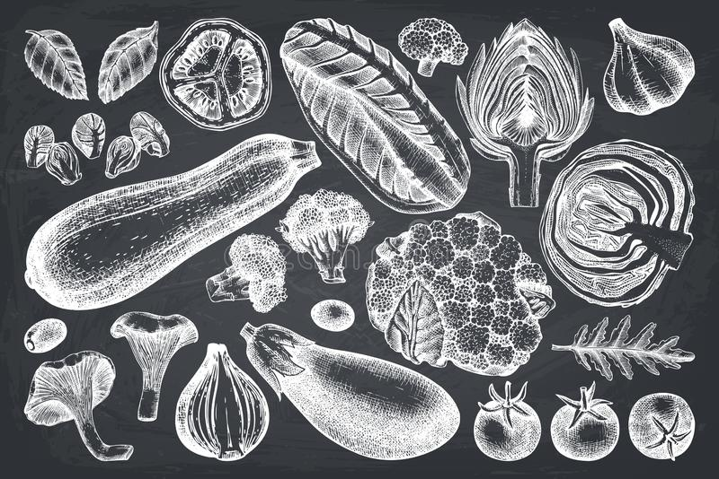 Vector collection of hand sketched vegetables. Vintage veggies and spices illustrations set. Healthy food drawings for vegetarian royalty free illustration