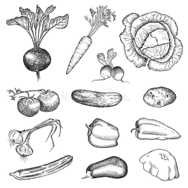 Vegetables set royalty free stock photography