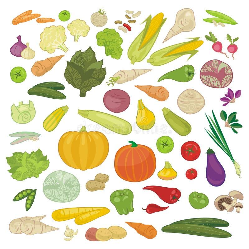 Vegetables Set. Set with various seasonal vegetables and greens vector illustration