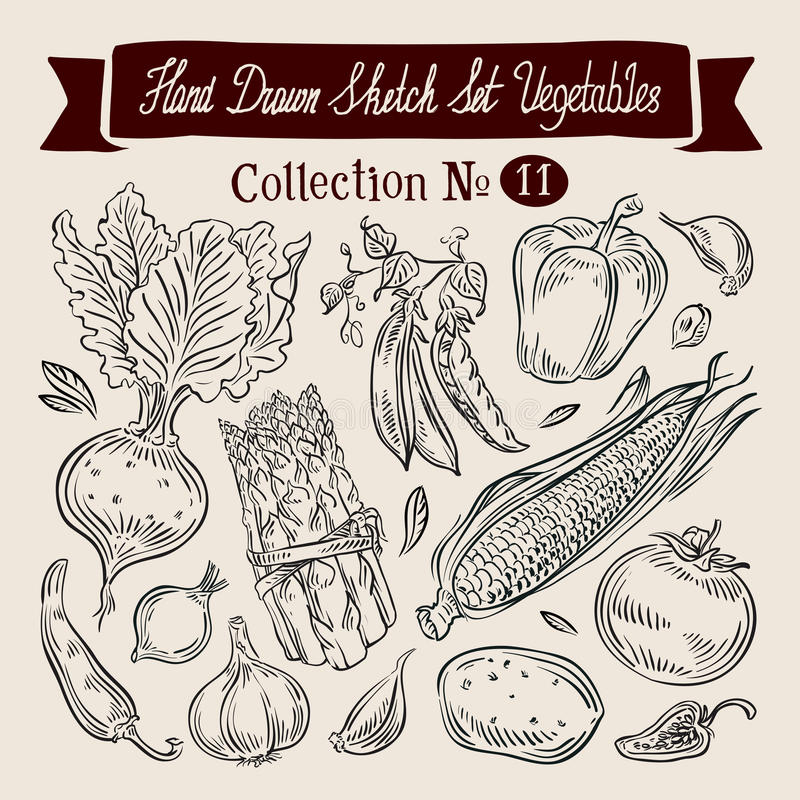 Vegetables sketch. set of elements - beet, peas. A collection of vegetables. sketch. vector illustration stock illustration