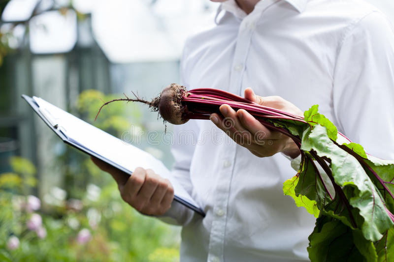 Vegetables specialist checking a beet royalty free stock photo