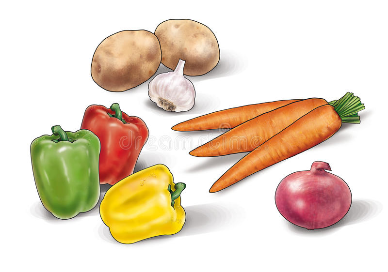 Vegetables still life Illustration. Colorful different vegetables Still Life watercolor, the carrot, garlic, onion, onion red chili peppers and potatoes isolated royalty free illustration