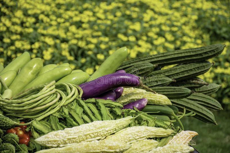 Vegetables in Thailand Eggplant , Purple Winged Bean , Bitter gourd and Winter melon royalty free stock photos