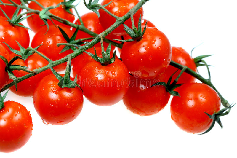 Vegetables tomatoes with water drops stock image