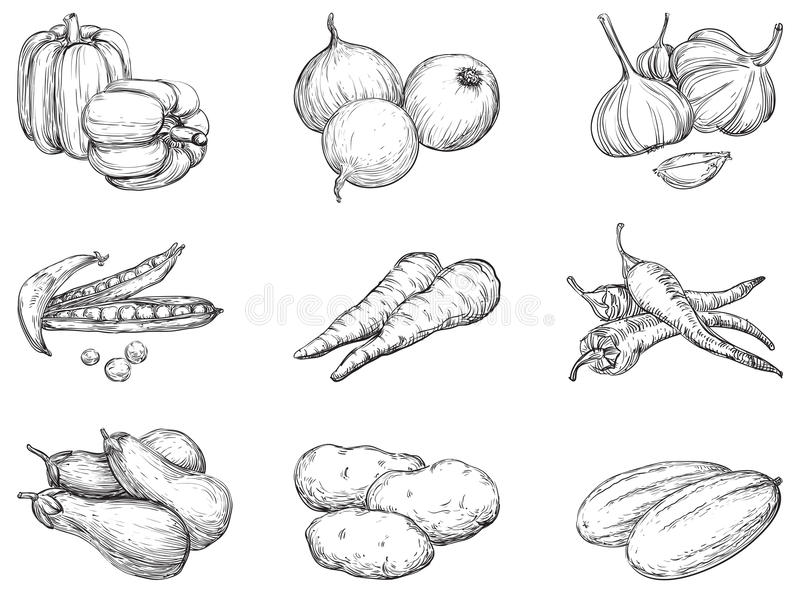 Vegetables stock illustration