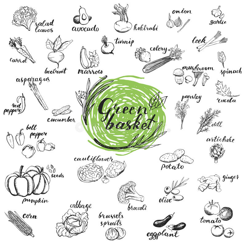 Vegetables vector set. stock image