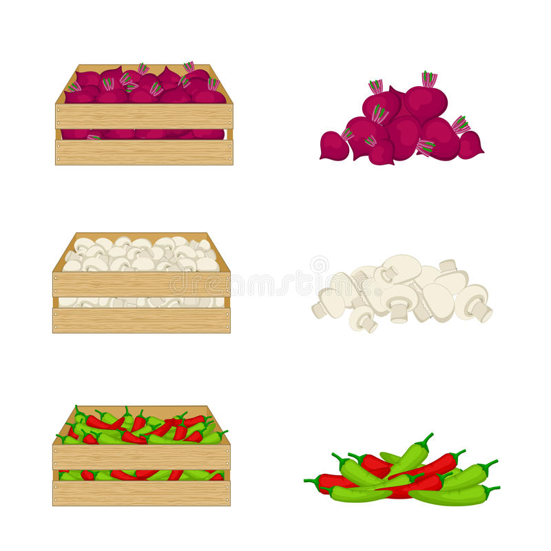 Vegetables in wooden boxes on white background. Beetroot, mushrooms, chilli. Organic food illustration. Fresh vegetables vector illustration