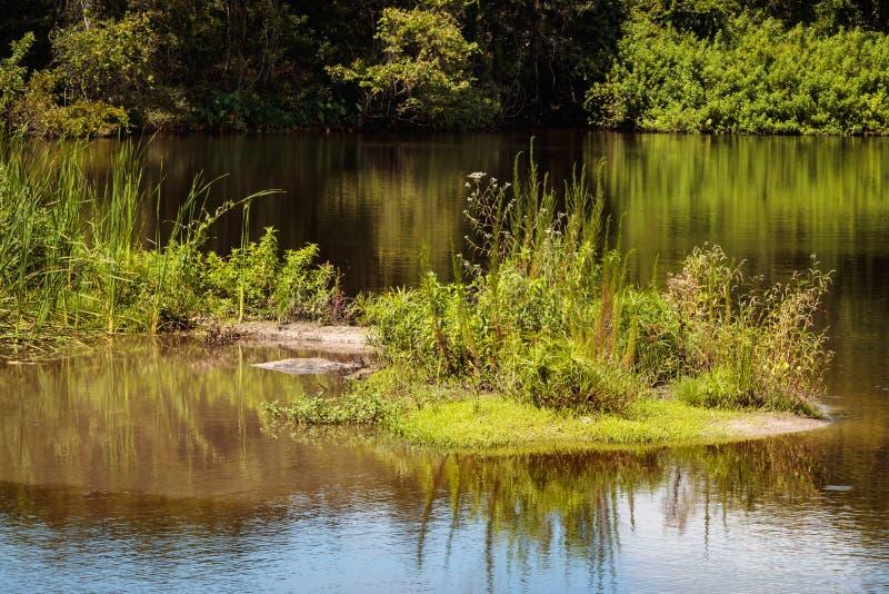 Vegetación cada vez mayor de la isla del lago imágenes de archivo libres de regalías