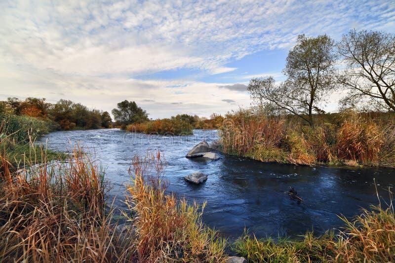 Vegetación del río y del borrachín a lo largo de los bancos imágenes de archivo libres de regalías