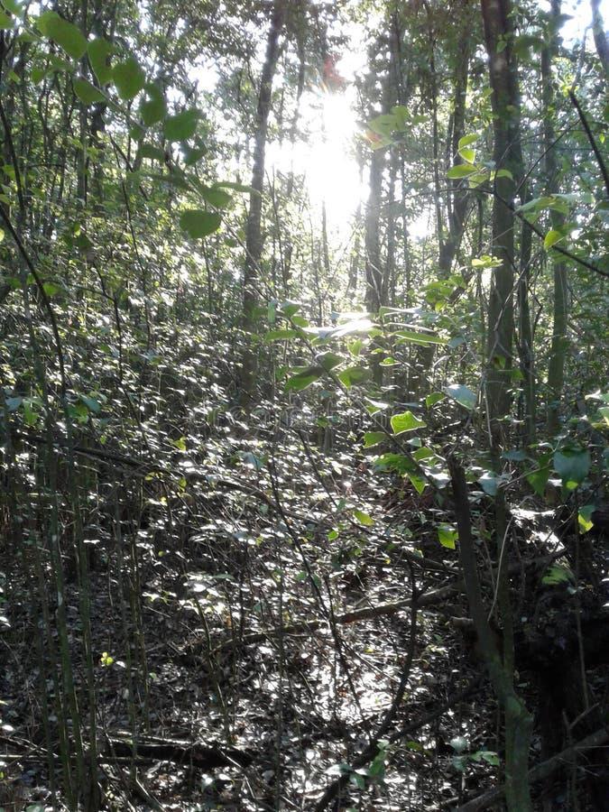 Vegetación en bosque imagenes de archivo