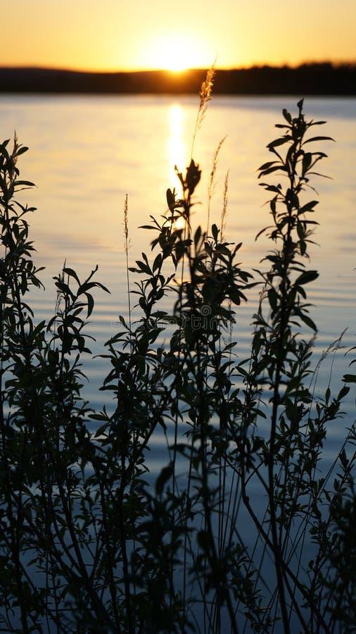 Vegetaci?n en el fondo de la naturaleza de la puesta del sol del agua imagen de archivo libre de regalías
