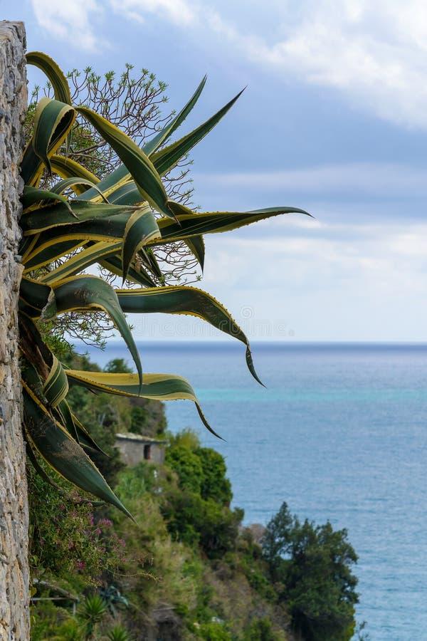 Vegetación mediterránea típica, en una roca en el mar imagen de archivo