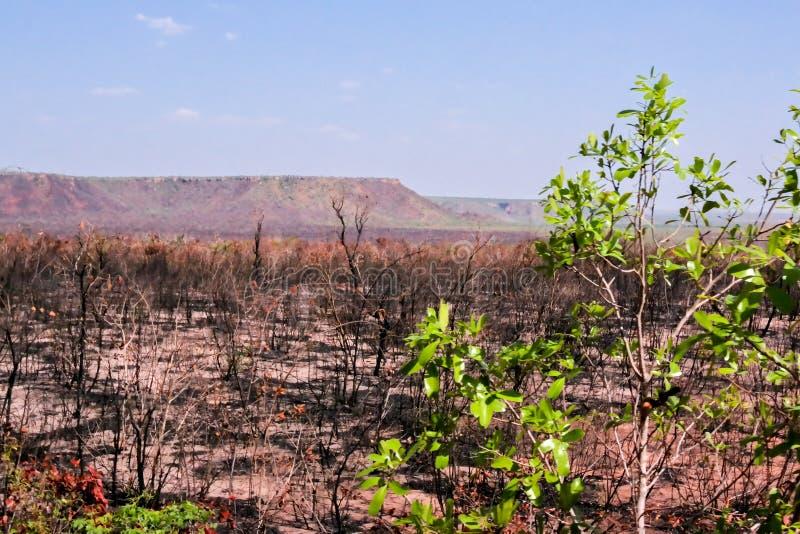Vegetación quemada en Jalapao foto de archivo libre de regalías
