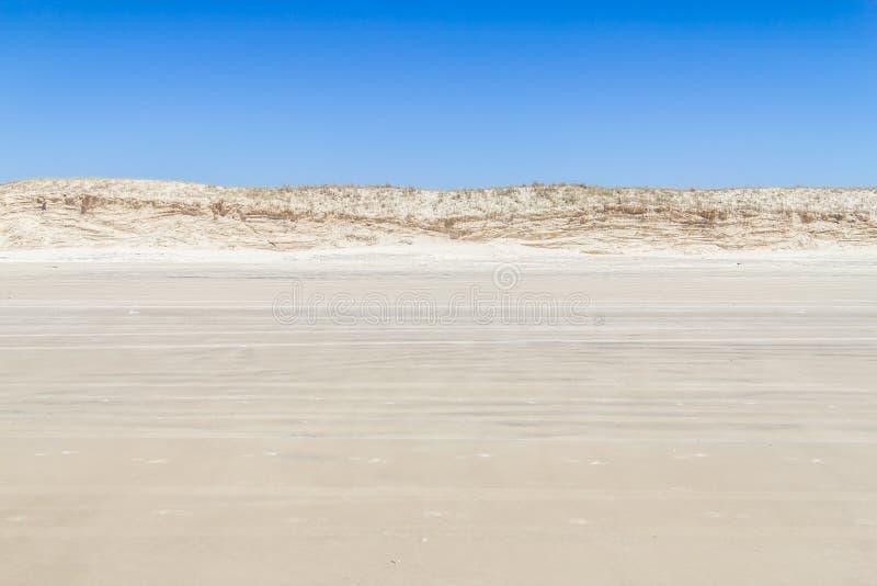 Vegetación sobre las dunas en la playa de Torres foto de archivo libre de regalías