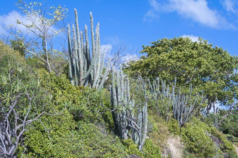 Vegetación subtropical fotos de archivo libres de regalías