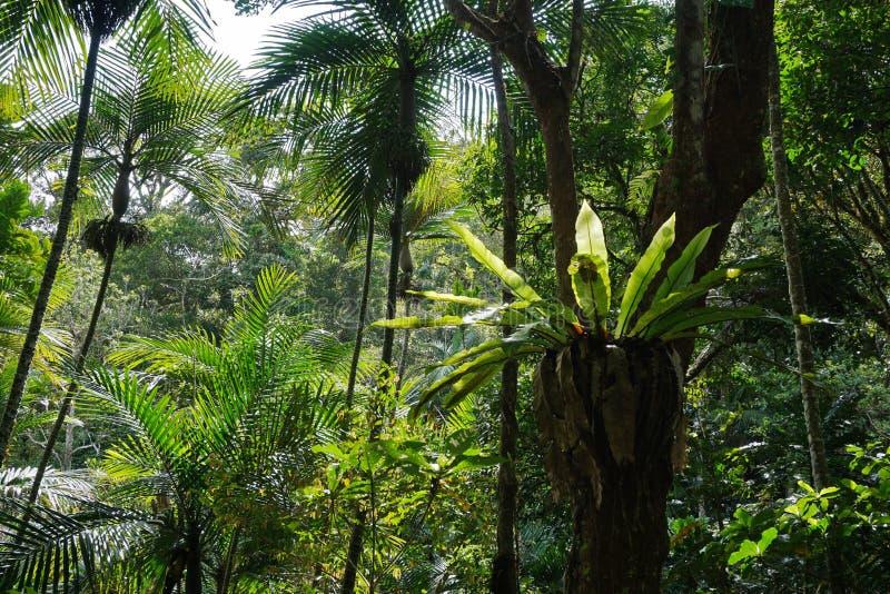 Vegetación subtropical en el bosque de Nueva Caledonia foto de archivo