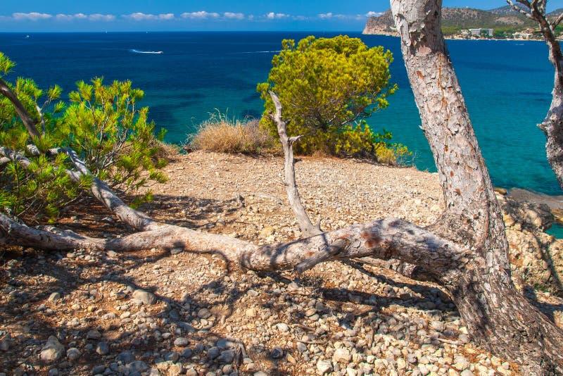 Vegetación subtropical que crece en la costa de Mallorca fotos de archivo
