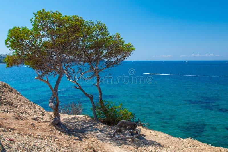 Vegetación subtropical que crece en la costa de Mallorca imagen de archivo