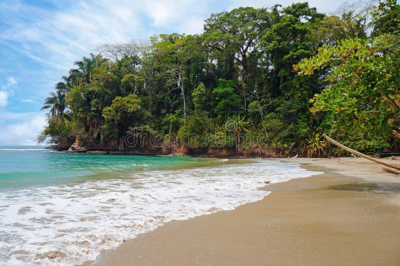 Vegetación tropical de la playa imagenes de archivo