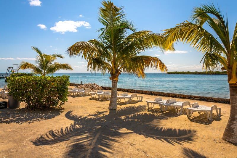 Vegetación y Palapas en la isla caribeña hermosa de Belice imagenes de archivo