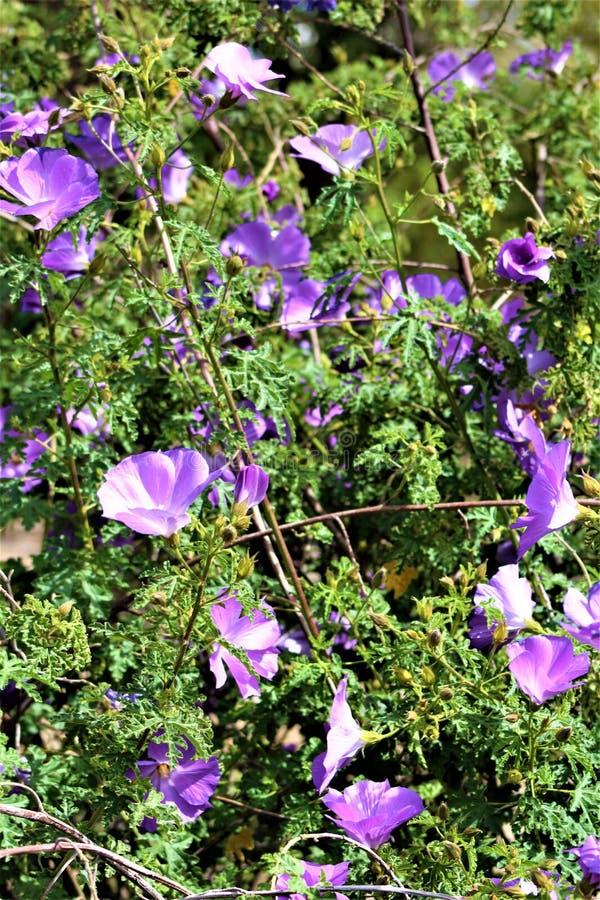Vegetaci?n en el parque zool?gico de Phoenix, centro para la protecci?n de naturaleza, Phoenix, Arizona, Estados Unidos de Arizon imágenes de archivo libres de regalías