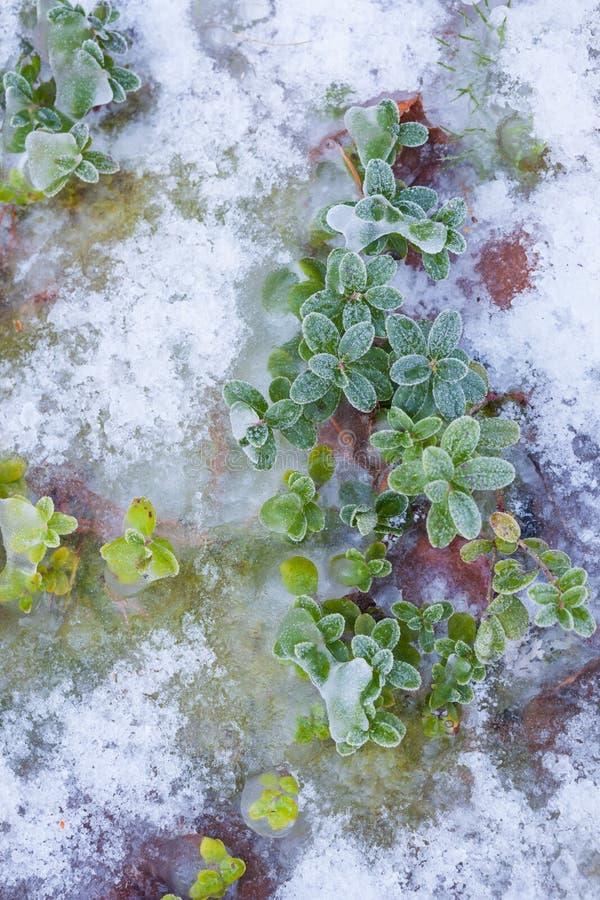 Download Vegetaion Congelé Sur L'au Sol De Forêt Image stock - Image du solide, irrégulier: 87703683