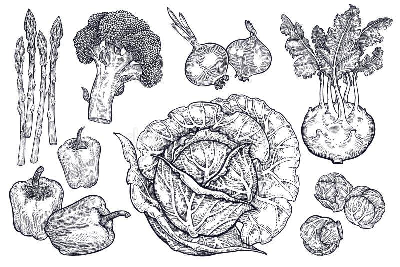 Vegetais ajustados Gráficos do vintage ilustração royalty free