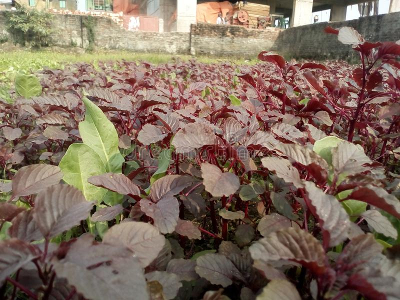 Vegetais bonitos fotos de stock