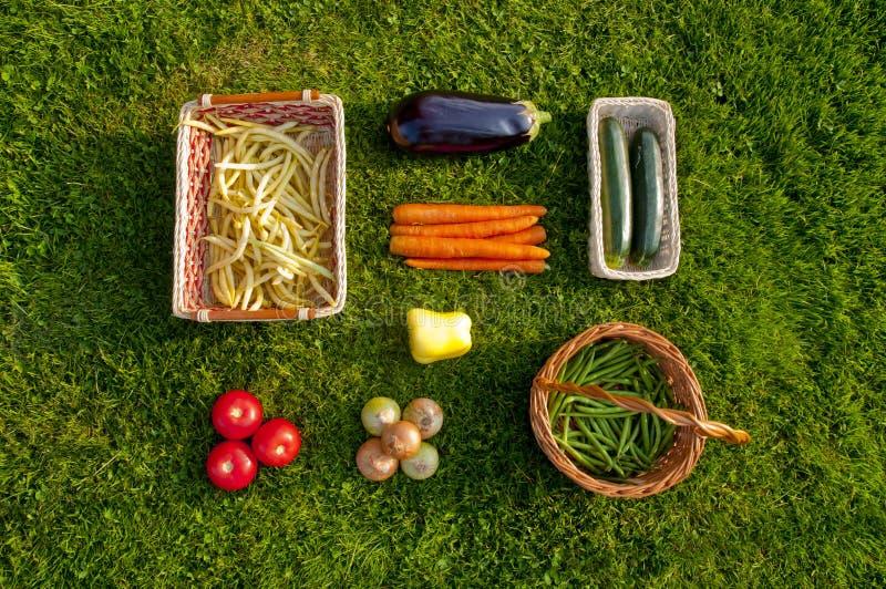 Vegetais cultivados em casa recentemente colhidos que encontram-se na grama - a parte superior vie imagens de stock royalty free