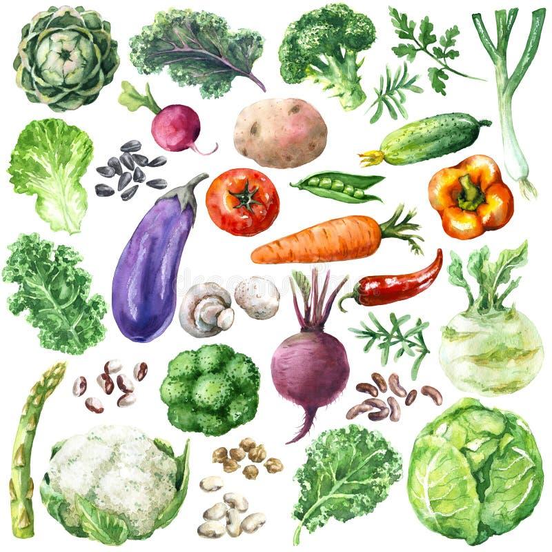 Vegetais da aquarela ajustados ilustração stock
