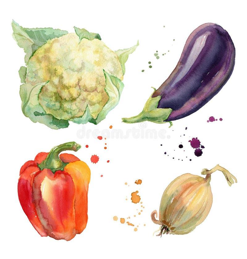 Vegetais da aquarela ajustados ilustração do vetor