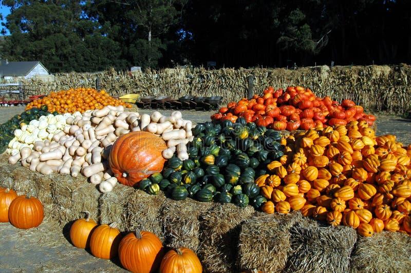 Vegetais de Halloween fotografia de stock royalty free