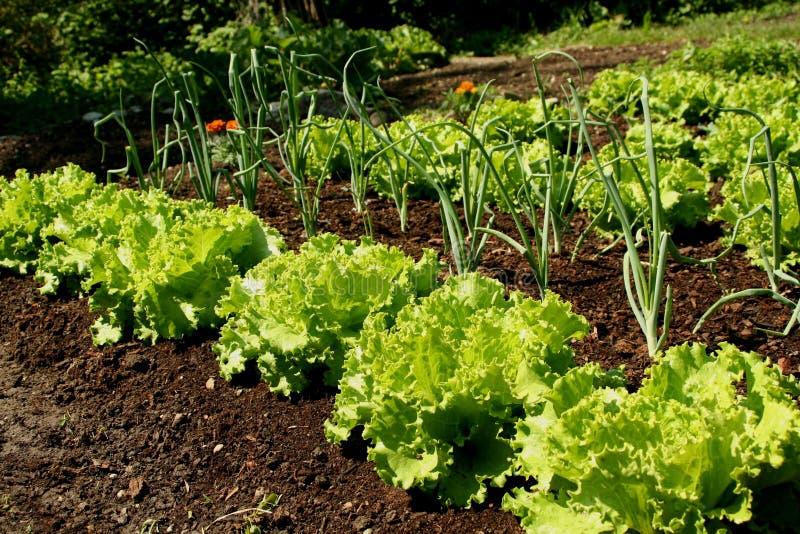 Vegetais de Springtame fotografia de stock
