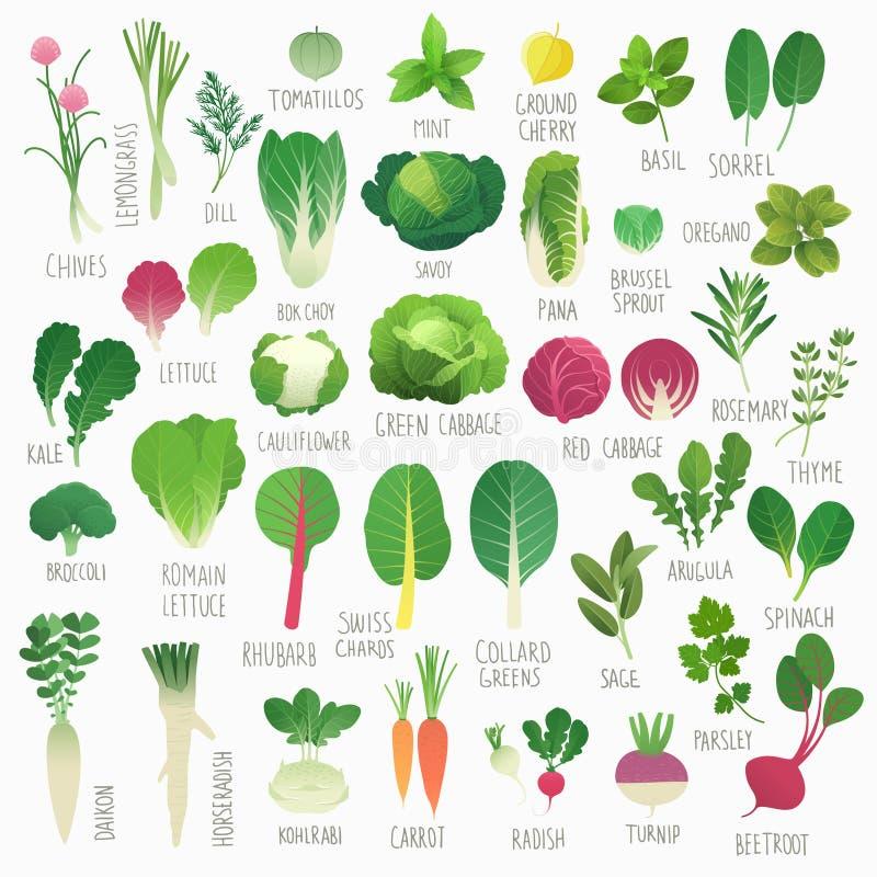 Vegetais e ervas ilustração stock