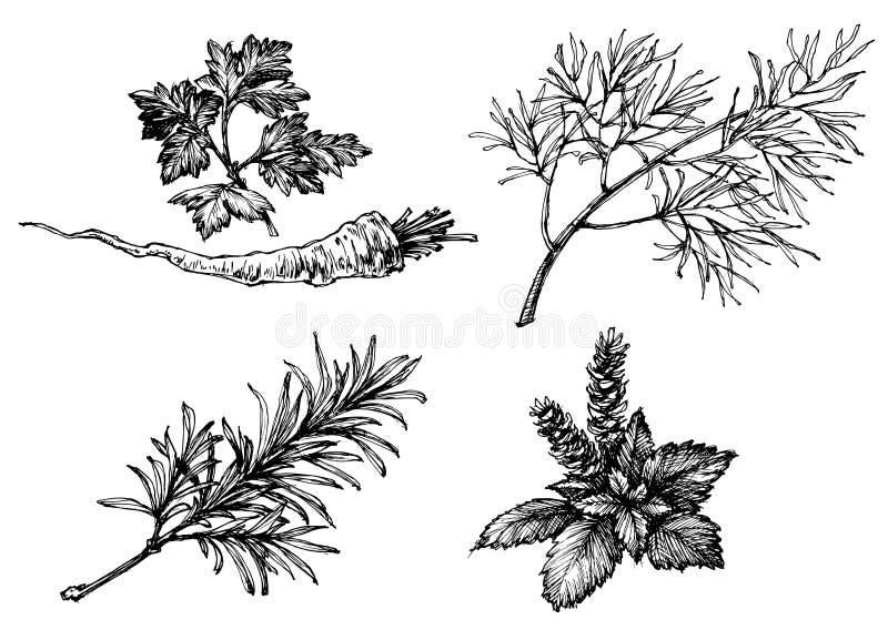 Vegetais e ervas ilustração royalty free