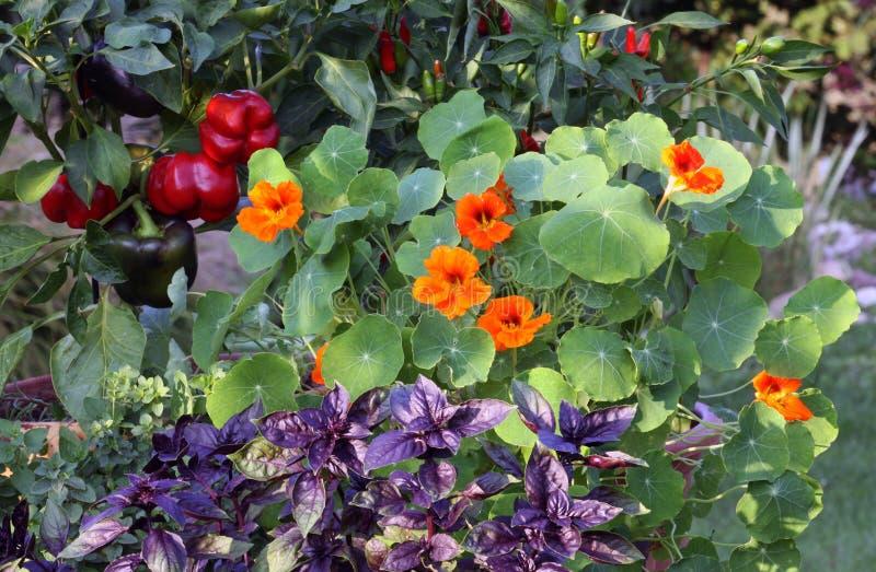 Vegetais e ervas em uns potenciômetros fotografia de stock