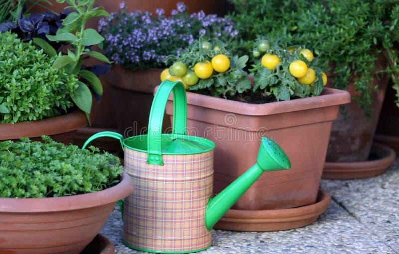Vegetais e plantas das ervas no potenciômetro imagens de stock