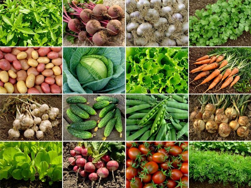 Vegetais e verdes fotografia de stock royalty free