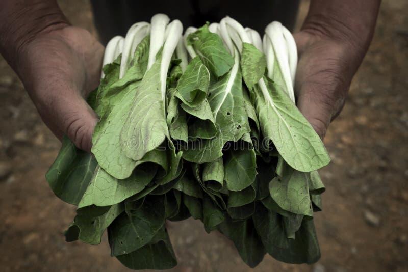 Vegetais nas mãos imagens de stock royalty free